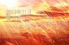 キャンペーン開催のお知らせ 『<冬の販促 第一弾> 冬商戦来たる!今年も熱く盛り上げよう!』
